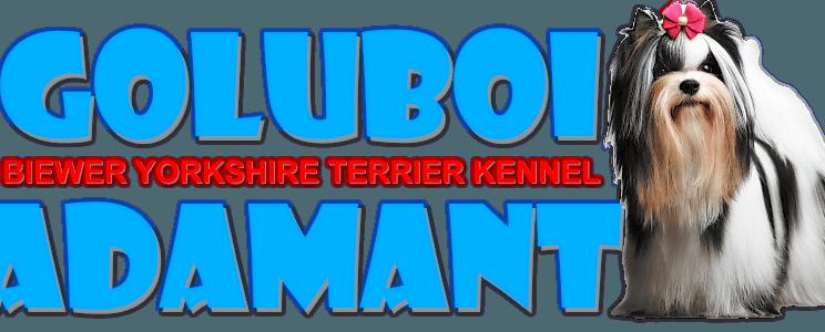 Goluboi Adamant kennel