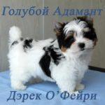Голубой Адамант Дэрек О'Фейри